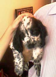 Cocker spaniel rescued by Pareesa from India
