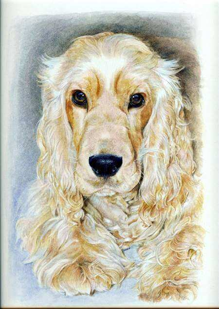 Pastel drawing of Max, our  golden cocker spaniel