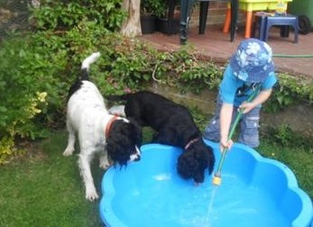 Two cocker spaniels by a children's pool