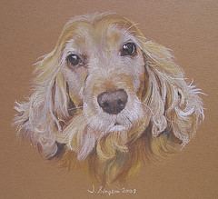 Coloured sketch of golden cocker spaniel