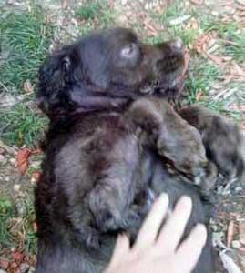 Teddy Loves Belly-Rubs