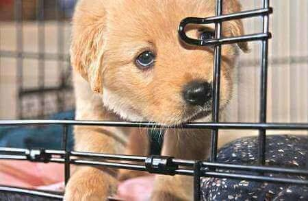 Cute puppy curled up in his dog crate.