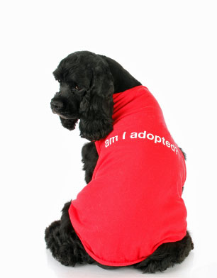 Black American cocker spaniel endorsing dog adoption!