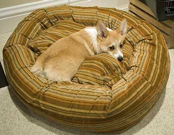 When it comes to choosing dog beds, it's important to get it right.