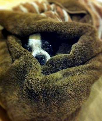 Cosy pet blankets will help to keep your dog warm!