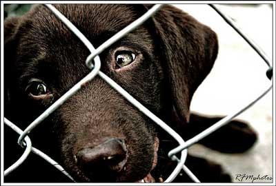 Black puppy in a dog pen