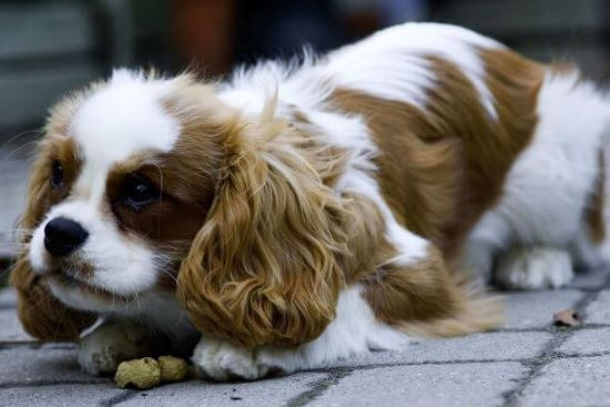 Food aggression in dogs is fairly common, but it can be helped