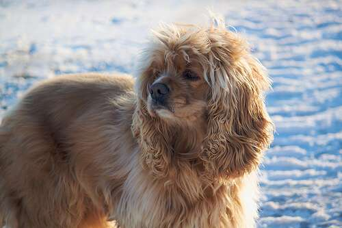 What Food Can You Give A Dog With Kidney Failure