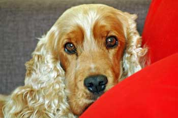 Max watching me work, chilling out on red cushions.