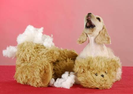 Cocker Spaniel puppy with damaged stuffed toy