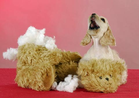 Puppies chew! This puppy has chewed all the stuffing out of his teddy!