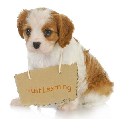 Orange and white cocker spaniel puppy wearing 'Just Learning' sign around his neck.