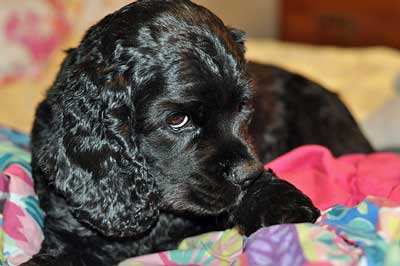 Start your puppy on a BARF diet and watch him grow!