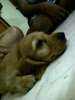 Sleeping Mood of Shirley