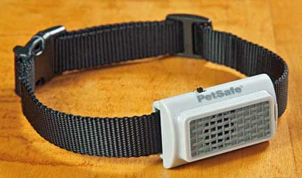Black dog barking correction collar.