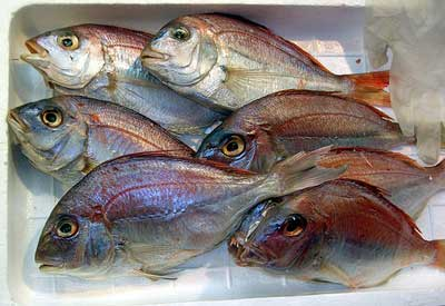 Seven fresh, brightly colored fish laying in a box.