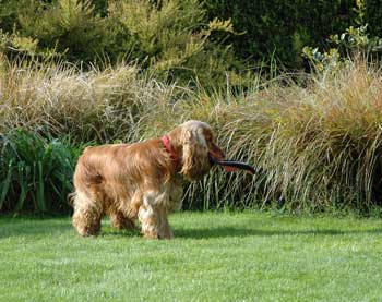 Stop your dog barking in the garden - give him something to play with!