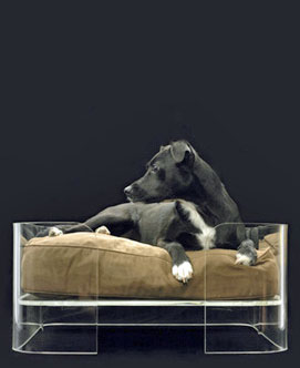 Dog beds come in all shapes and sizes - just look at this perspex bed!