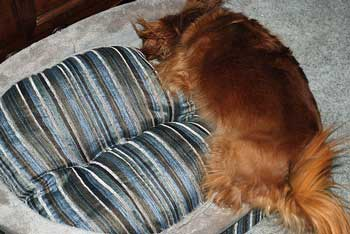 Dog beds need to be comfy - this one certainly looks like it!