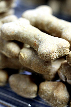 Our easy dog biscuit recipes are quick and tasty - why not try them and see?