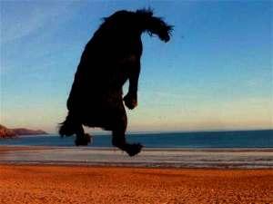 Healthy black cocker spaniel jumping high on the beach.