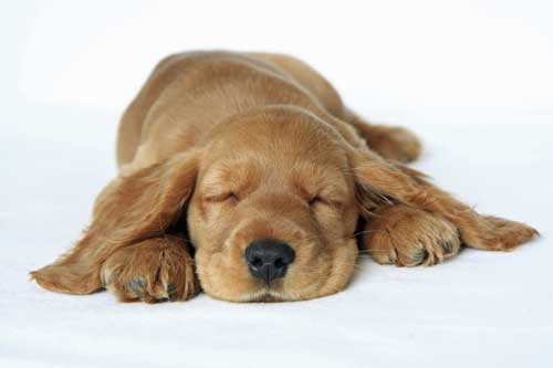 When training a puppy, keep it simple and short - otherwise he may lose interest!