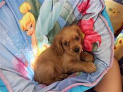 Lulu Resting