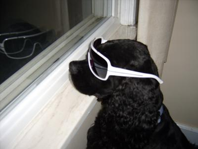 My Buster - He Loves His Shades!