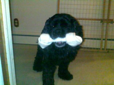 Buster With His Bone