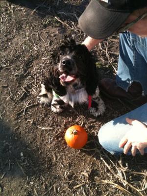 My Pumpkin With His Pumpkin!!