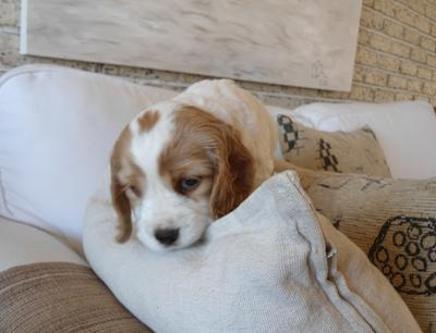 Becca Found A Sofa