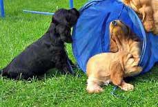 Possessive And Aggressive Puppy!