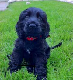 Puppy Food Aggression Can Be Stopped
