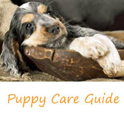 Go to...Puppy Care Routine