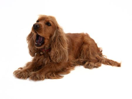 Why do dogs bark? Many things, including being bored, hungry, lonely, or frightened
